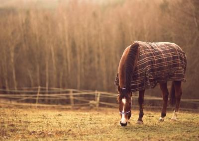 konie (1) (1500x839)