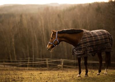konie (2) (1500x870)