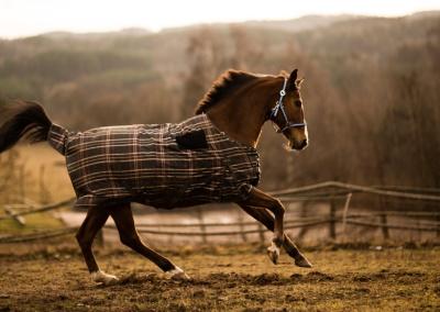 konie (3) (1500x892)