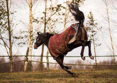 konie (4) (1500x857)