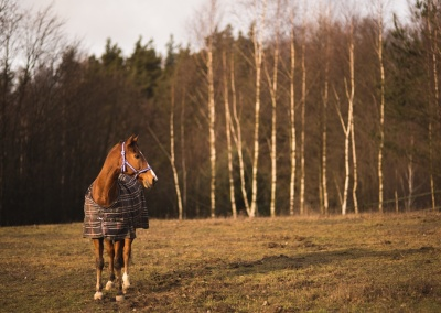 konie (5) (1500x928)